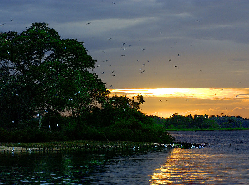 Sri Lanka – parc national de Bundala